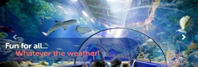 Bristol Aquarium banner image