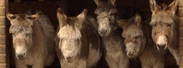 matlock farm park donkeys